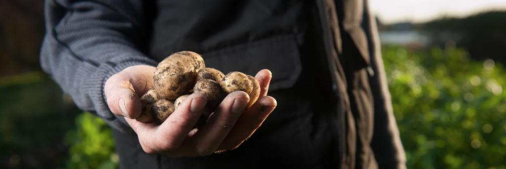 Gemüsewasser als natürlicher Dünger