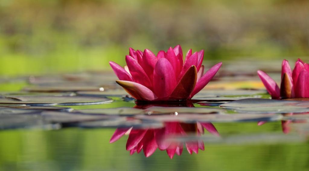 Gartenart: Wassergarten