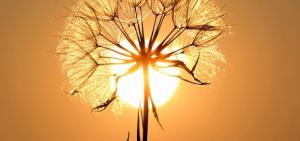Pflanzenlampe Test