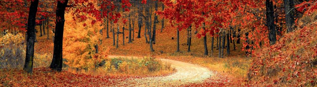 Herbst: Garten