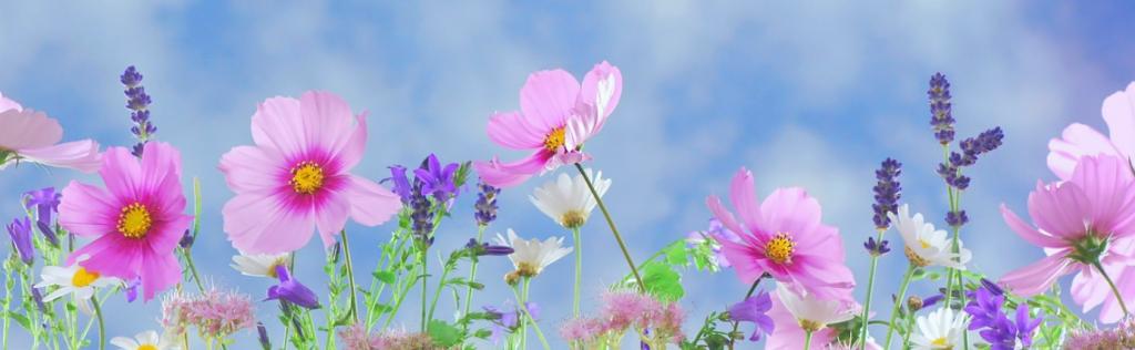 Miniermotte Garten