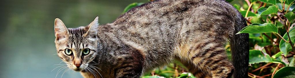 Katze gegen Wühlmäuse
