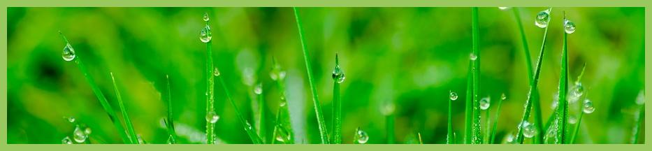 Rasen nass Ratgeber