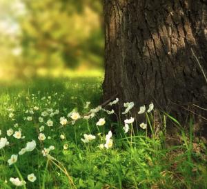 Pflanzen für Schatten unter Baum