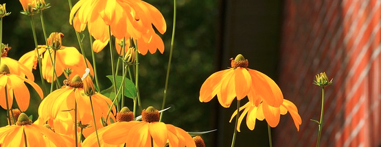 Frühlingsblumen Kegelblume