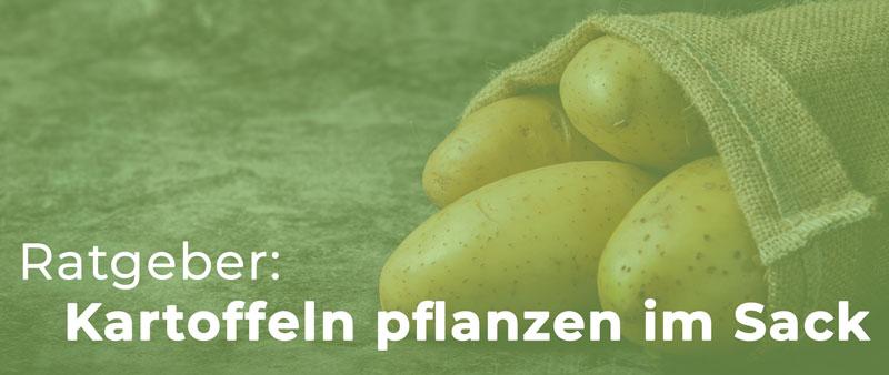 Kartoffeln pflanzen im Sack