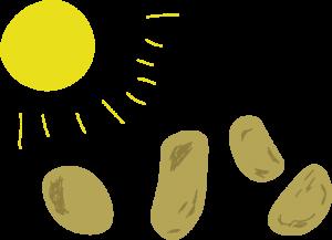 Kartoffeln Sonne