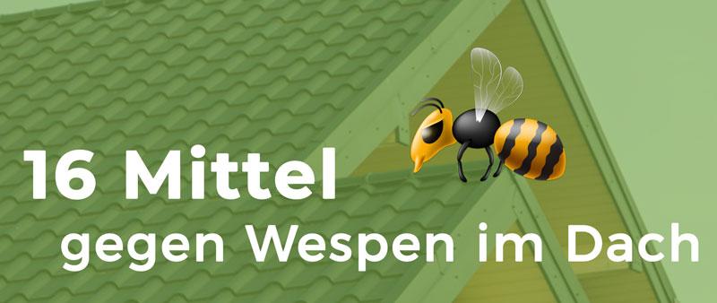 Mittel gegen Wespen im Dach